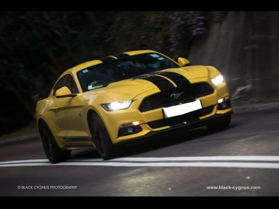 Mustang Mustang